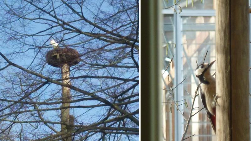 Lenteknoppen-voorjaar-ooievaar-specht