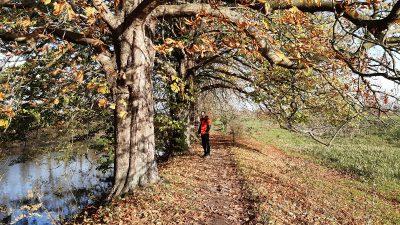 Wandelcoaching Marian Lubbers winter